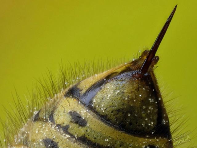 Лечение пчелами мужчин от простатита апитерапией или укусами: описание процедуры