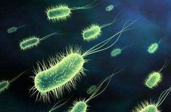 Острый и хронический бактериальный простатит: симптомы, причины, лечение, последствия