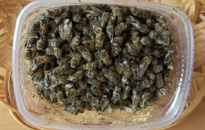 Пчелиный подмор в коробке